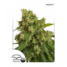 Autoxtreme (3 semillas)