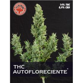 Thc autofloreciente (1 semilla)