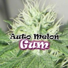 Auto Melon Gum (4 semillas)