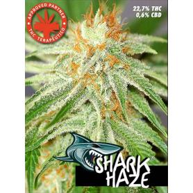 Shark Haze