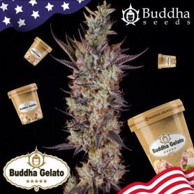 Buddha Gelato