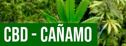 CBD Canamo