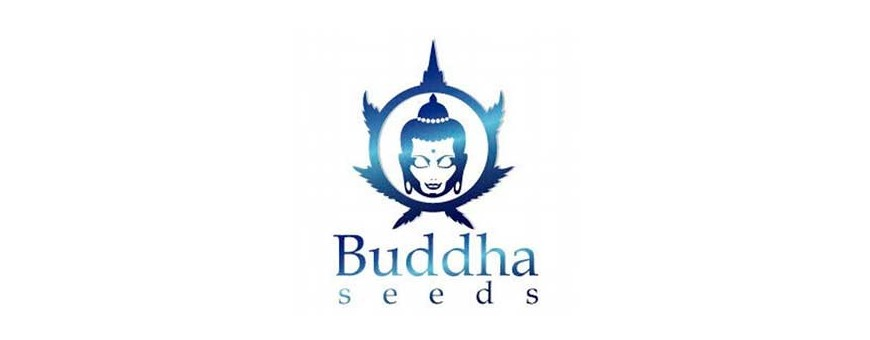 Venta de semillas autoflorecientes | Distribuidora Semillera Multimarca | El Punto Eres Tú