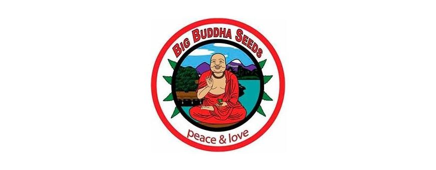 Big Buddha Seeds - Semillas de Marihuana | El Punto Eres Tú ®