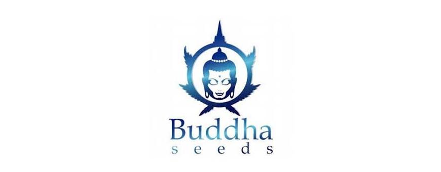 Venta de semillas de variedades con CBD | Distribuidora Semillera Multimarca | El Punto Eres Tú