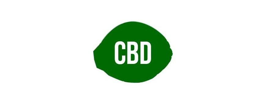 Semillas de Marihuana CBD - CBD Rich |El Punto Eres Tú ®