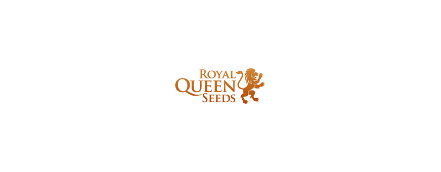 Semillas Royal Queen Seeds |El Punto Eres Tú ®