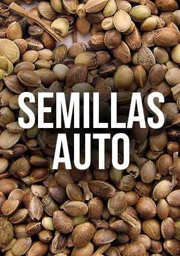 semilla-auto.jpg